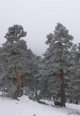 Tormenta de nieve 1