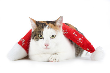 spotted cat and a santa hat, isolated