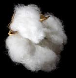 fluffy crop poster