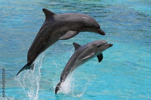skoki-delfinow