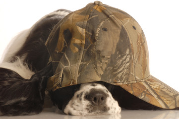 american cocker spaniel wearing camouflage ball cap
