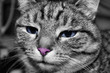 Fototapeten,katze,blau,rosa,schwarzweiß