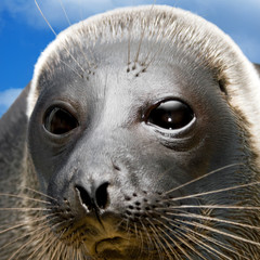 Amusing seal The square form