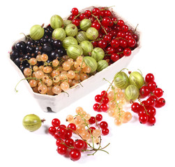 Fresh red, white, black currants and gooseberry