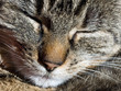 Closeup of a sleeping cat