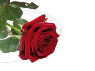 Rose auf Teller