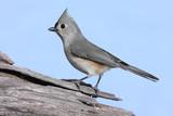 Bird On A Stump poster