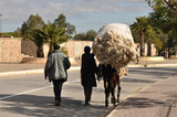 Wool transport with mule, Fes Morocco poster