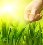 Human hand touching green grass. Environment conservation concep poster