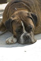 Beautiful dog -
