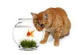 Curiosity Killed the Goldfish poster