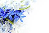 Fototapety Spring flowers background