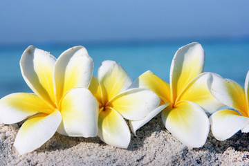 Flowers on the beach