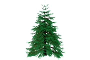 3d fir tree render isolated