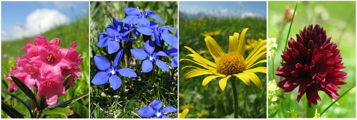 Buntes Alpenblumenquartett im Sommer