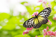 roleta: butterfly feeding on a flower