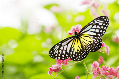 karmienie motyla na kwiat