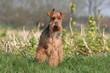 Petit chien de face en pleine campagne