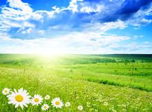 "Постер, картина, фотообои ""field of daisies"""