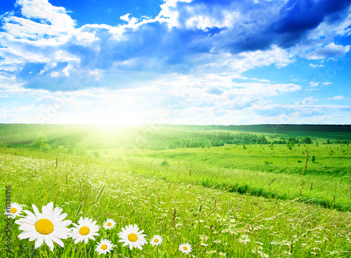 field of daisies - 11386916