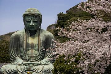 Kamakura Daibutsu with cherry blossoms