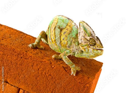 Papiers peints Cameleon Chameleon on a brick wall