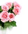 Roses bouquet in vase