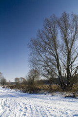 Baum im Winter