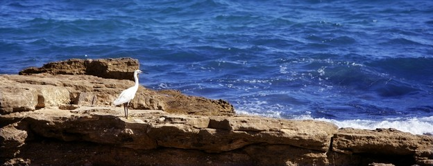 Sea white bird on a rocky mediterranean shore