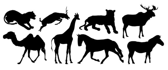 silhouettes of various animals on white