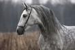 Grey stallion on field