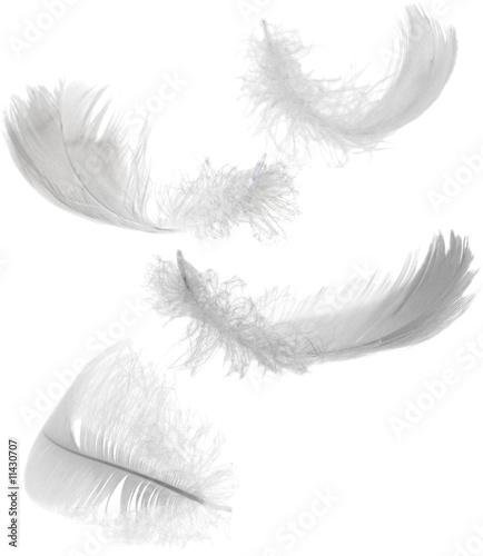 Fotobehang Kip four white feathers