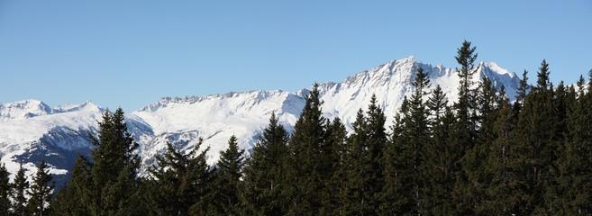 sapins et montagnes