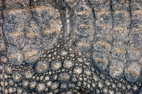 Crocodile skin background