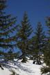 forêt alpines