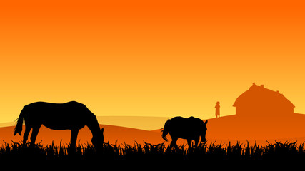 two horses on pasture at sunset in summer