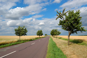 Empty countryside road with cherry-trees