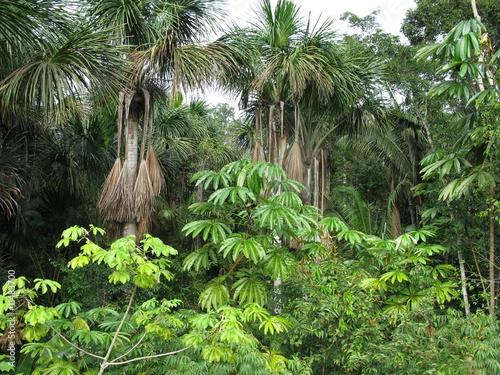 vegetation regenwald amazonien brasilien stockfotos und lizenzfreie bilder auf. Black Bedroom Furniture Sets. Home Design Ideas
