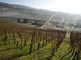 Allée de vignes et chemins