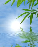 Bamboo and sky reflected in the water; Zen atmosphere. poster