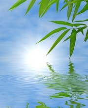 Bamboo and sky reflected in the water; Zen atmosphere.