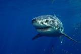 Fototapeta podwodne - Meksyk - Ryba