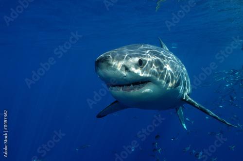 Fototapete Blue water - Unterwasser - Fische