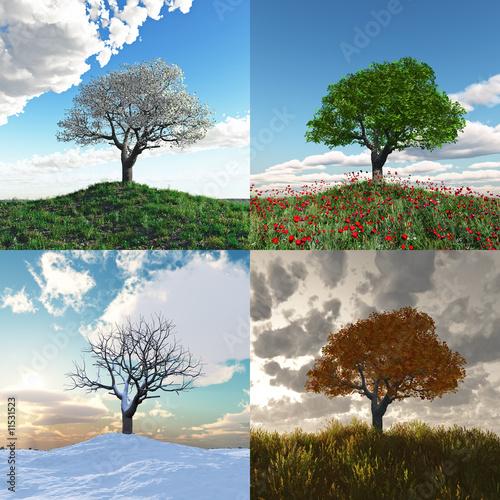 einsamer Baum in vier Jahreszeiten Zeitraffer