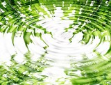 Reflection of bamboo in water poster