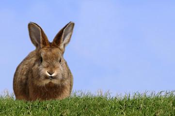 Junges Kaninchen auf der Wiese