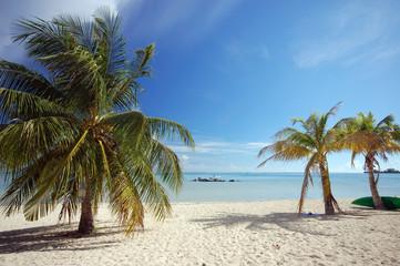 Palm trees on white sand beach, Moorea, French Polynesia