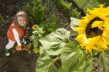 Portrait of girl watering sunflower, high angle view