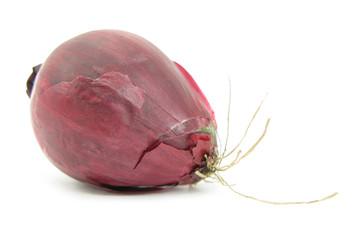 Onion purple