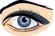Female eye on the white background. Vector